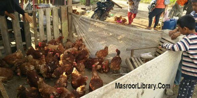 Palu : Hari Ke Tujuh Catatan Tn Arief Rahman Efendi